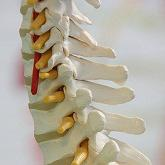 Spine Biologics Market Expected to Reach $2,214 Million by 2022