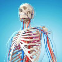 Vascular Imaging Systems Market  and its Growth Prospect in the Near Future