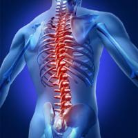 Spine Biologics Market to Set Phenomenal Growth in Key Regions by 2028