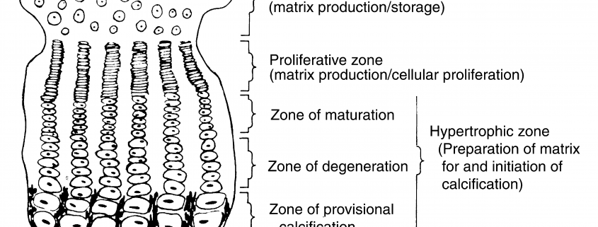 Growth Plate Anatomy And Function Orthogate Press