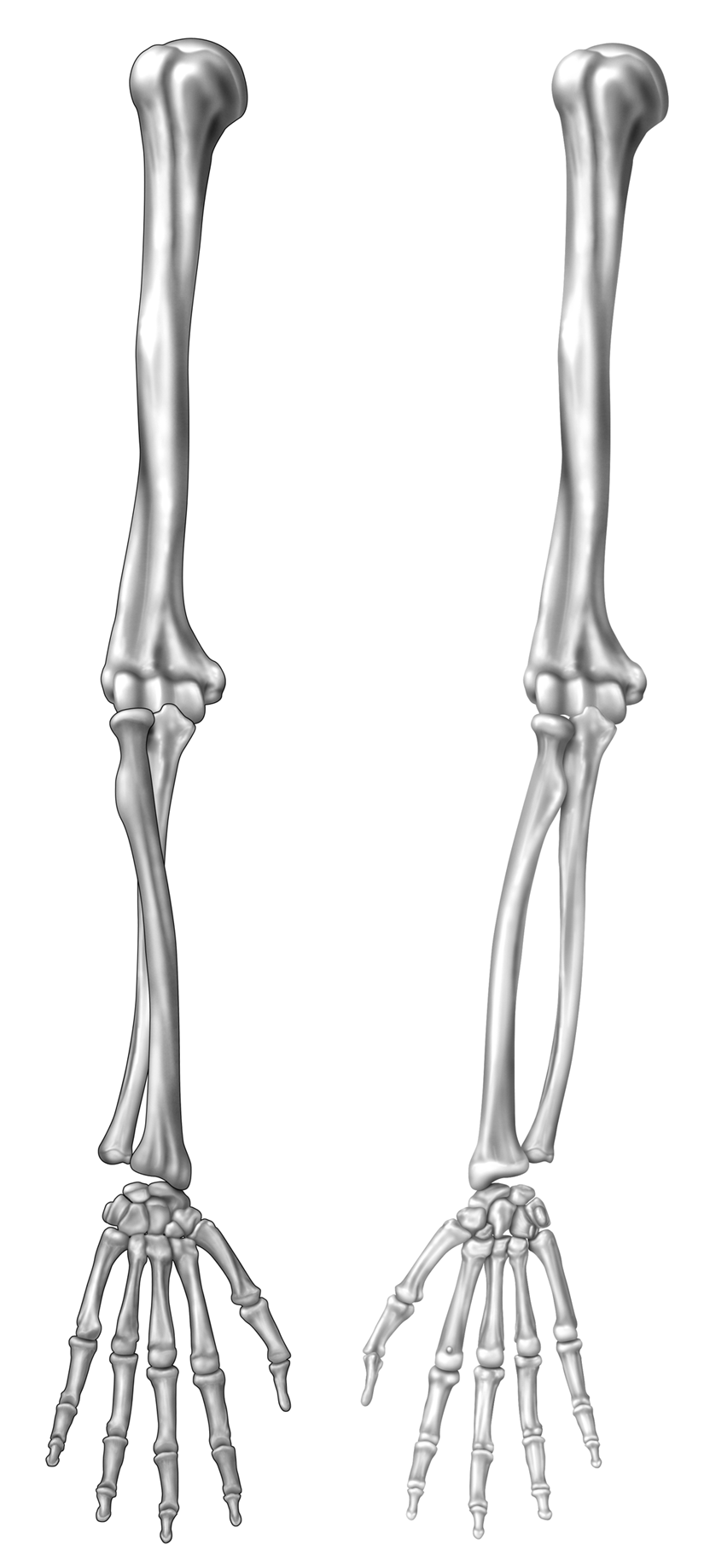 Elbow And Forearm Orthogate Press