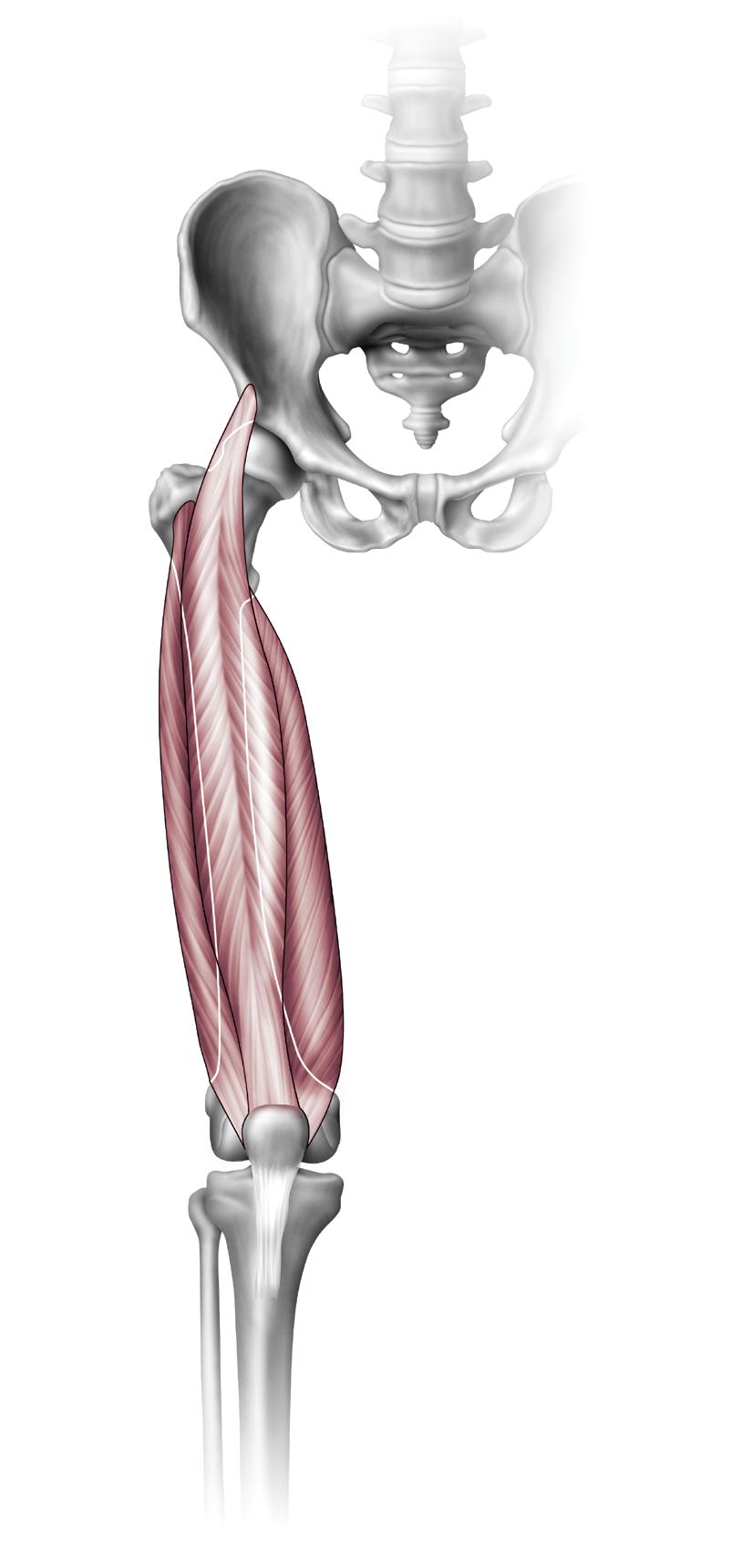 Anatomy Archives - Orthogate Press
